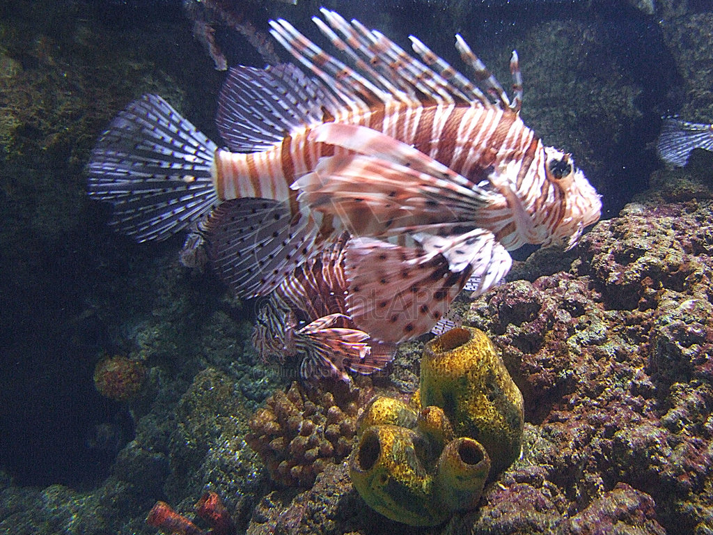 Colourful Examples of Fish Photography for your ...
