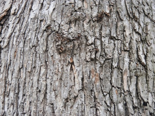 Tree Wood Texture Design