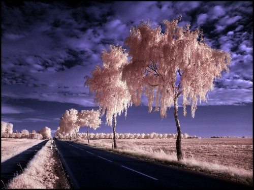 Country Road II Infrared