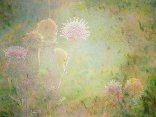 soft watercolor thistles